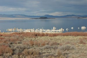 Photo by Scott Stine. Tufa creeps out of Mono Lake.