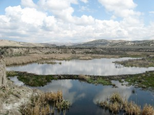 A beaver dam stretches across Susie Creek, creating an oasis of wetlands and open water among the Nevada desert.