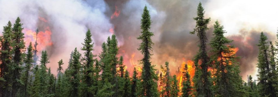 ALASKA'S 2015 FIRE SEASON CONSUMES 5.1 MILLION ACRES OF FOREST